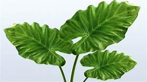 Zimmerpflanze Große Blätter : pflegeleichte und robuste zimmerpflanzen ~ Lizthompson.info Haus und Dekorationen