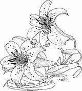 Coloring Pages Flower Lily Adult Flowers Colouring Printable Lilies Sheets Ladybug Printables Realistic Bing Anycoloring Sketch Recommended Template sketch template