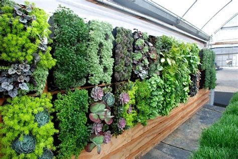 Plants For Vertical Gardens by Top 10 Plants For Vertical Garden Top 10 Plants