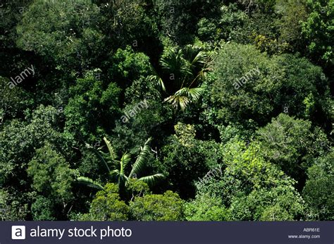amazon canap rainforest canopy plants pixshark com images