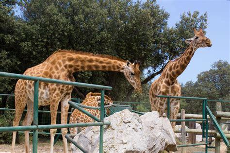 zoo animal barben frances zoos cons pros animals france zoologico parque than harm francia welfare romano naranja ruinas
