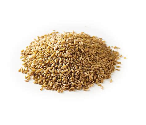 what is freekeh freekeh farik grain freekah nutsandspices
