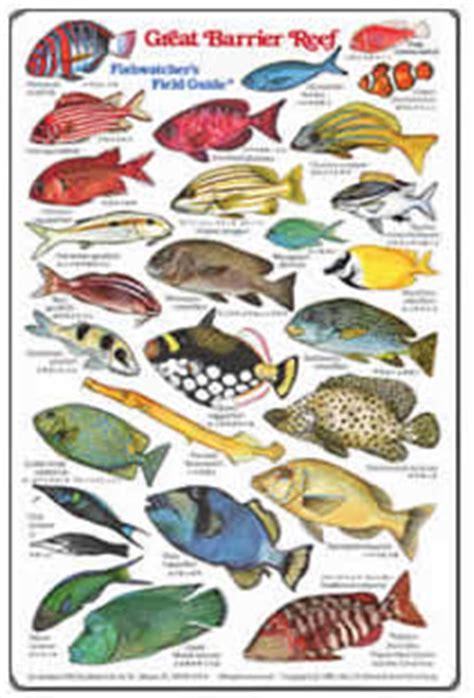 books  australian fishes australian fish books
