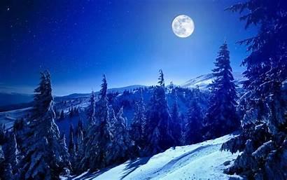 Winter Moon Forest Snowy Microsoft Windows Snow