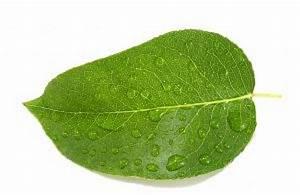 Las hojas mojadas 5 Descargar Fotos gratis
