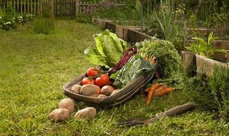Alan Titchmarsh Tips On Growing The Right Vegetables In
