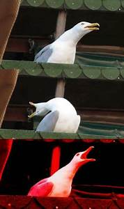 Inhaling Seagull Blank Template