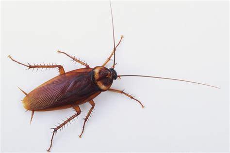 cockroaches survive