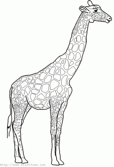 outline pictures  animals  colouring