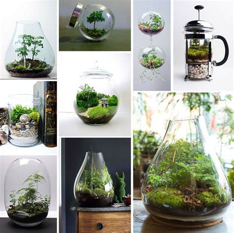 best plants for closed terrarium 140 best images about terrariums open and closed on pinterest terrarium ideas indoor