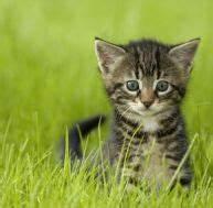 Laver Un Chaton : snoopybabe le nouveau chat star qui gouverne le web ~ Nature-et-papiers.com Idées de Décoration