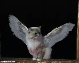 cats with wings cat wings pictures freaking news