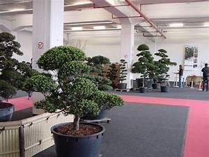 Japanischer garten bonsai ausstellung interkoi 2013 for Garten planen mit bonsai lebensbaum kaufen