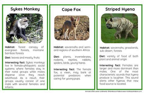 animals  africa nomenclature  information cards