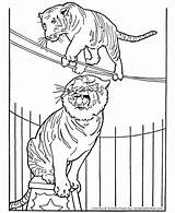 Circus Coloring Pages Animals Animal Tiger Printable Tigers Elephant Monkey Sheets Honkingdonkey Lion Horse Performing Clown Sheet Seal Getcoloringpages Un sketch template