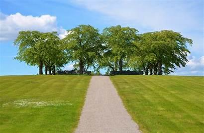 Tree Trees Sky Grass Pathway Natur Park