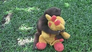 Sloth Hug GIF - Find & Share on GIPHY