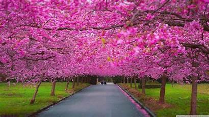 Season Spring Romantic Wallpapers Freecreatives Backgrounds Source