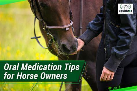 horse near veterinarians oral veterinary medications tricks five