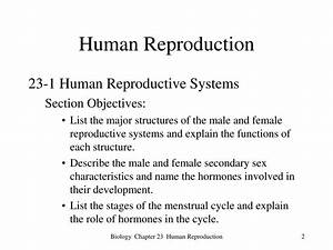 Ppt - Human Reproduction Powerpoint Presentation