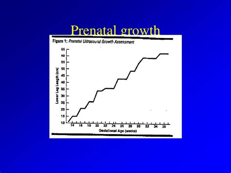 Ppt Physical Development In Infancy Powerpoint