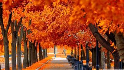 Fall Orange Trees Desktop Background 4k Wallpapers
