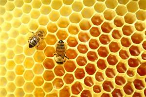 Bee Keeping  Honeycomb