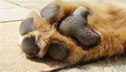Paw Dog Paws Feet Pavement Pups Sensitive