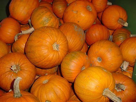halloween pumpkin pics high resolution pics hd