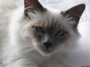 top 10 most beautiful cats in the world 2015 - YouTube