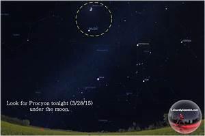 Star Shots – Procyon (Alpha Canis Minoris) | The Leisurely ...