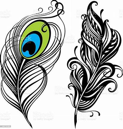 Feathers Vector Feather Peacock Illustration Illustrations Clip