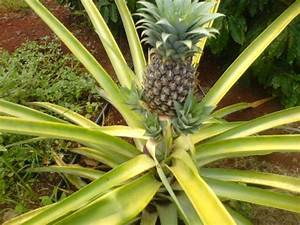 10 Best Fruits To Grow In Containers