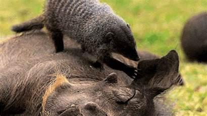 Animals Nature Animal Friends Thirteenwnet Pbs Gifs