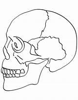 Coloring Skull Bones Anatomy Bone Human Crossbones Printable Dog Physiology Getcolorings Bestcoloringpages Boys Teenagers Getdrawings Pile Drawing Sheets Colorings Worksheet sketch template