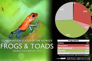 Frog Species Chart Chart The World 39 S Most Endangered Frogs