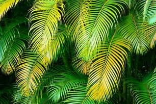 palm leaves in green and gold photograph by karon melillo devega