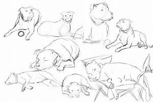 Dog Anatomy Drawing At Getdrawings