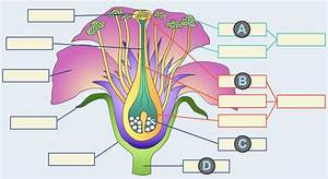 Solved  In The Diagram Below  Which Flower Part Will