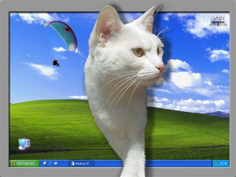 image drole anime qui bouge chat qui sort d une feuille centerblog