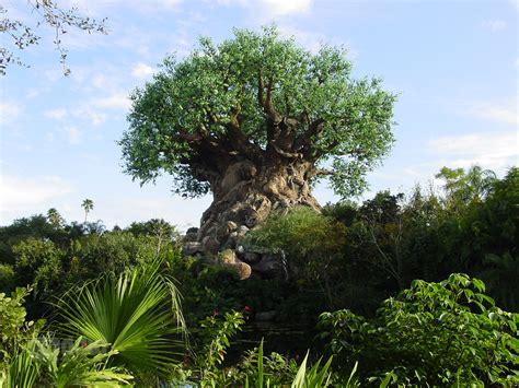Disney Animal Kingdom Wallpaper - animal kingdom tree of desktop wallpaper