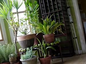 Plante Pour Appartement : nettoyer ses plantes vertes mode d 39 emploi ~ Zukunftsfamilie.com Idées de Décoration