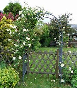 Rosen Für Rosenbogen : vorschlag f r wei e duftende rosen beet und rosenbogen mein sch ner garten forum ~ Orissabook.com Haus und Dekorationen
