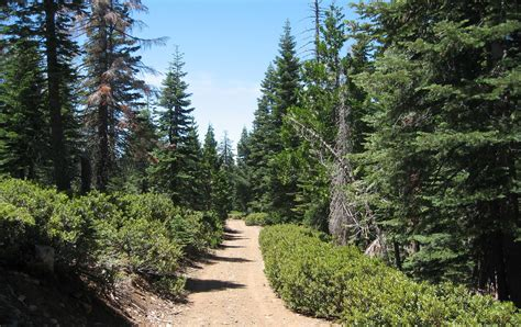 UC Research Forest Lands Expand with Donation | Our ...