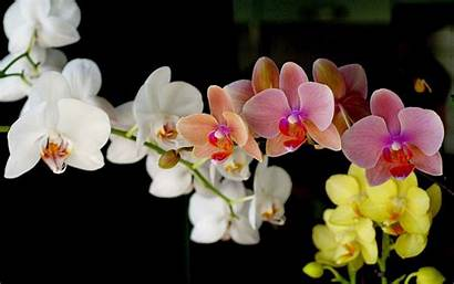 Orchid Wallpapers Colour Orchids Pretty Background Gorgeous