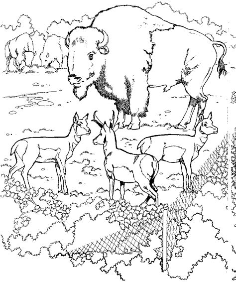Coloring Zoo Page by Zoo Coloring Pages Coloringpages1001