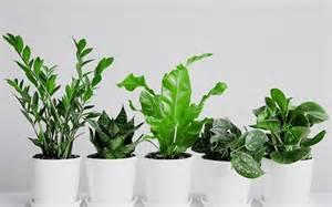 15 best low light houseplants to grow indoor