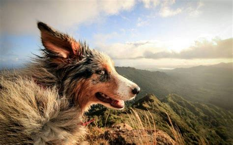 nature dog landscape animals windy wallpapers hd