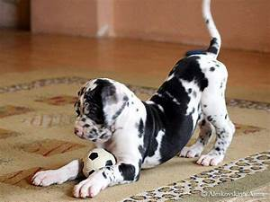 155 best images about future puppy? on Pinterest ...