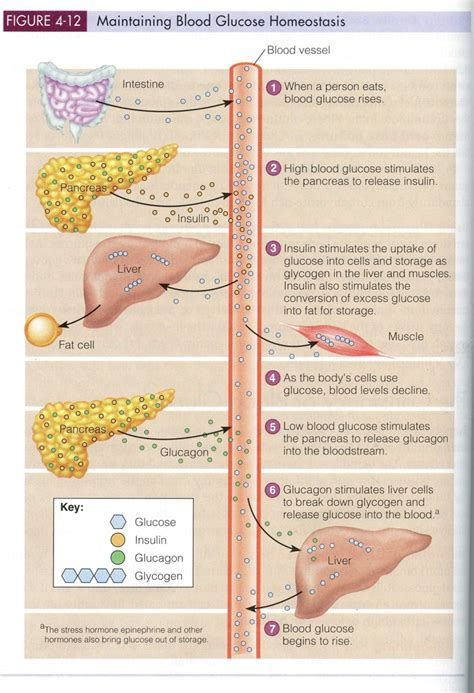 science  fat metabolism ketoschool